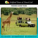 ashford tours Profile Picture